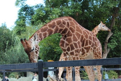 adelaide zoo, food, kids meals, animals, kids activities, school holiday activities