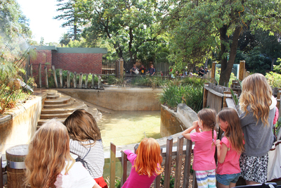 adelaide zoo, cheetah, kids, fun kids things to do in adelaide, animals, zoos, gift shop