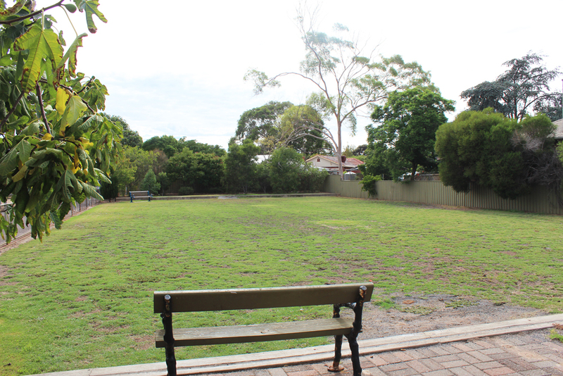 millswood park, fig trees, free figs, fig trees in Adelaide, fruit trees in Adelaide  - Millswood Park