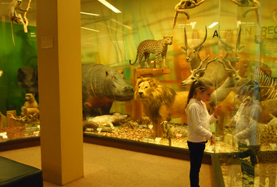 south australian museum, museums, north terrace, adelaide, fun for kids, educational fun