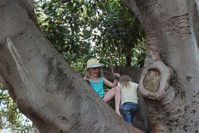 tree, climbing trees, trees in adelaide, kids climbing trees, playing outdoors, playing outside